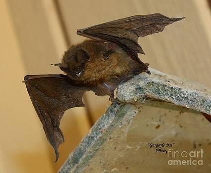 Patrick Witz - Gargoyle Bat