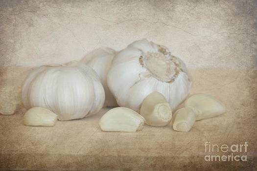 Sophie Vigneault - Garlic 4