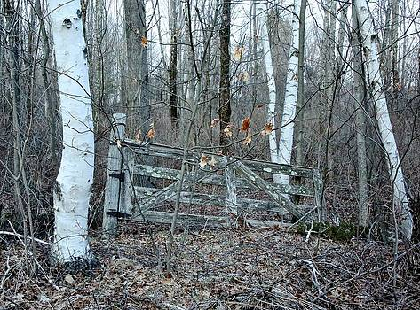 Gate and Birches by Randi Shenkman