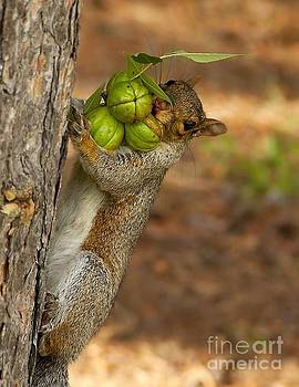 Gathering my nuts by Janet Moss