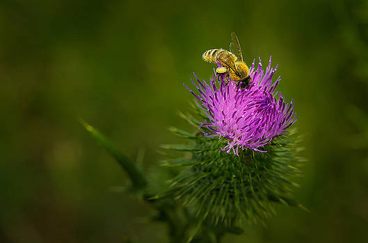 Gathering Pollen by Tony Heyward