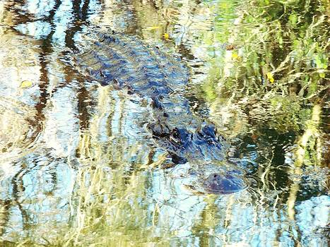 Gator in the Abstract 2 by Van Ness
