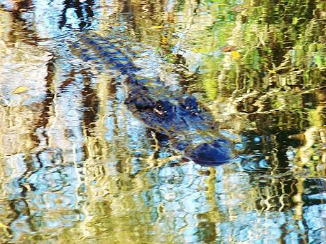Gator in the Abstract by Van Ness