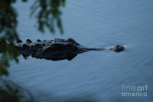 Gator on the Prowl by Theresa Willingham