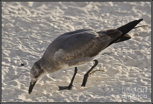 Agus Aldalur - gaviota en la arena