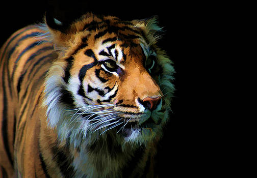 Gaze of a Tiger by Amanda Struz