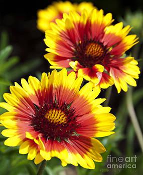 Nancy Stein - Gazebo Flowers
