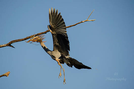 GBH Nesting by Brian Manley