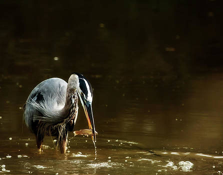 GBH with Fish by Stanley Lupo