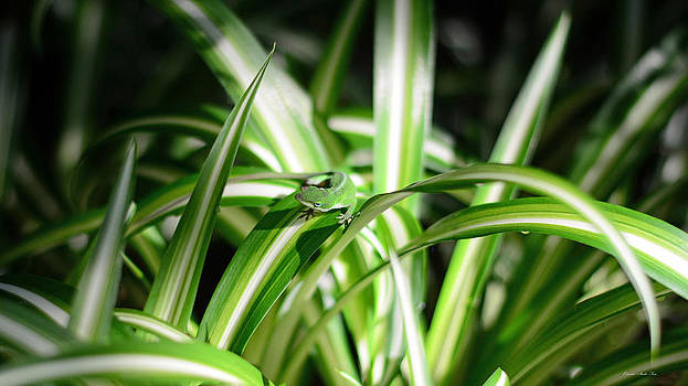 Connie Fox - Gecko Camouflaged on Spider Plant