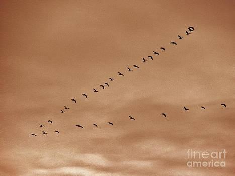 Judy Via-Wolff - Geese 2