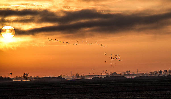 Geese and Ducks at Sun rise by Brian Williamson