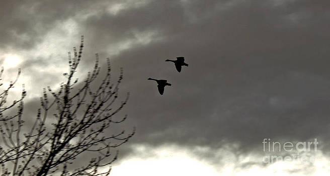 Deanna Proffitt - geese