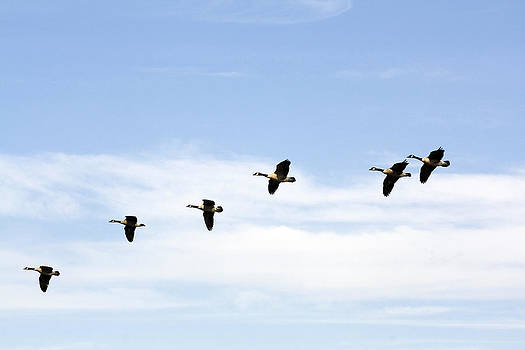 Terry Thomas - Geese Flying High