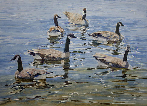 Geese by Helal Uddin