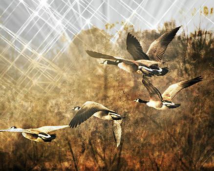 Marty Koch - Geese In Flight 2