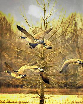 Marty Koch - Geese in Flight