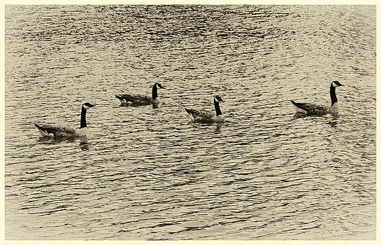 TONY GRIDER - Geese in Sepia
