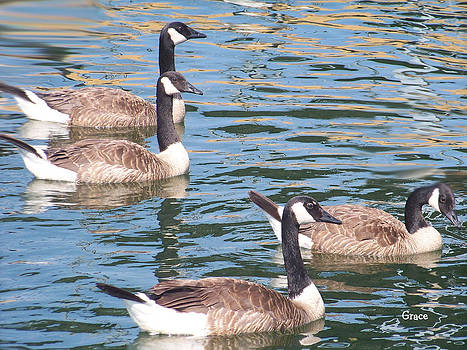 Geese  by Julie Grace