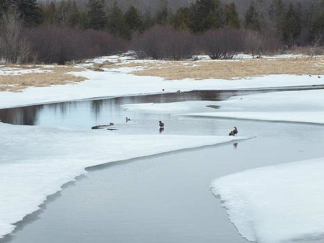 Geese on Pond by Gene Cyr