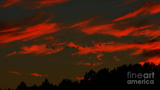 Geese Setting In Southern Skies by Kim Pate