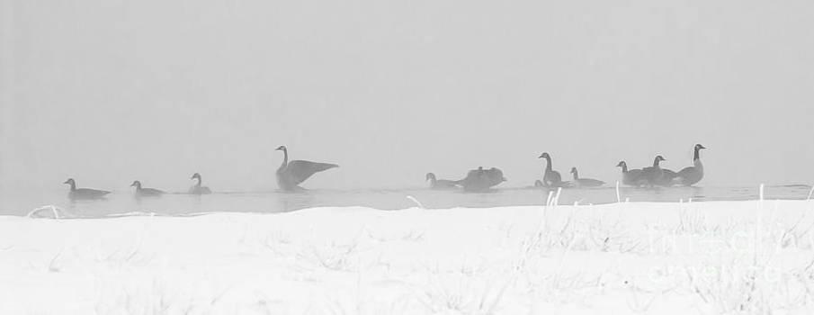 Steven Ralser - Geese