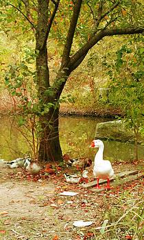 Geese by Yemi Kim