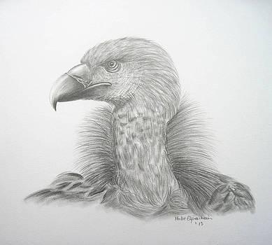 Geier by Haike Espenhain
