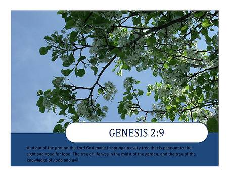 Genesis by Terrilee Walton-Smith
