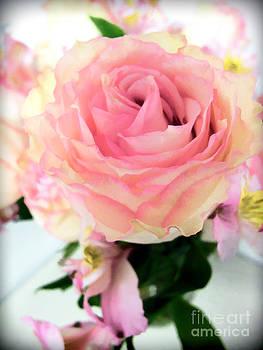 Anne Ferguson - Gentle Rose