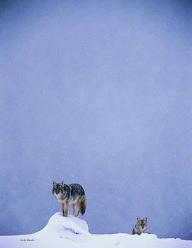 Scott Wheeler - Gentle Snowfall