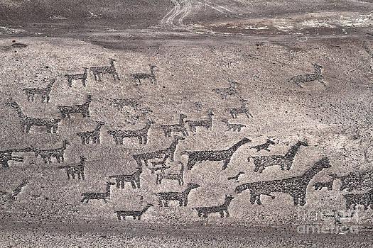 James Brunker - Geoglyphs at Tiliviche Chile