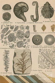 Science Source - Geology And Paleontology 1886