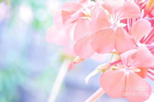 Geranium Pink by Ioanna Papanikolaou