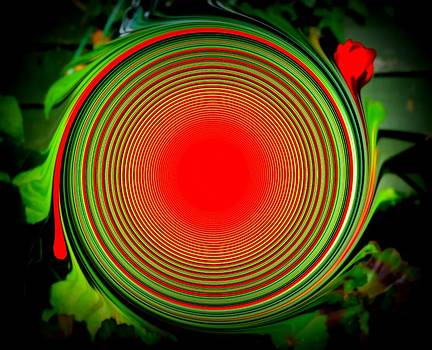 Geranium with a Twist by Eleni Michael