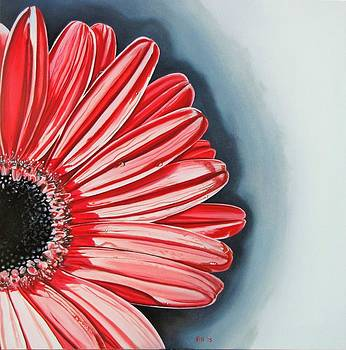 Gerber Daisy 2 by Kevin F Heuman
