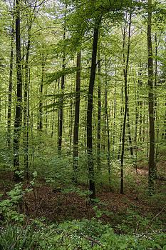Robert VanDerWal - Deep German Forest