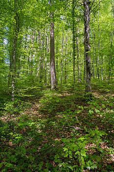 Robert VanDerWal - German Forest II