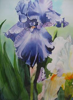 German Iris by Stephanie Zobrist