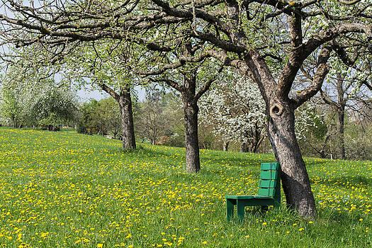 Robert VanDerWal - German Orchard II