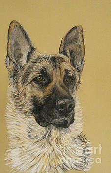 German Shepherd Deuce by Ann Marie Chaffin