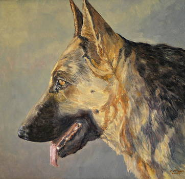 German Shepherd  by Karen McLain