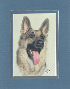 German Shepherd by Pat Mchale