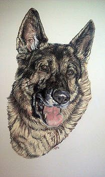 German Shepherd Rudi by Ann Marie Chaffin