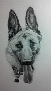 German Shepherd Sketch by Michelle Harrington