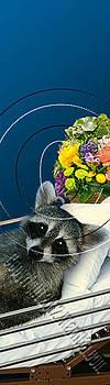 Jeanette K - Get Well Raccoon # 529