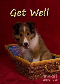 Jeanette K - Get Well Sheltie Puppy
