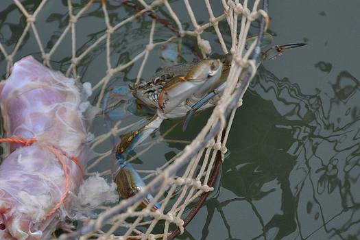 Getting Crabby by Jennifer Zirpoli