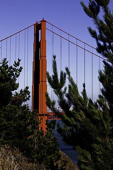 GGB trees by Joe Luchok