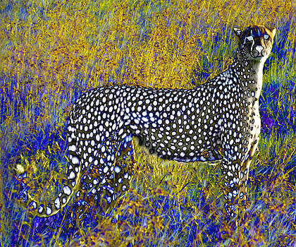 Ghost Cheetah by Philip Brent